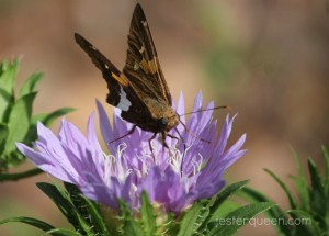 Brown on purple on green butterfly