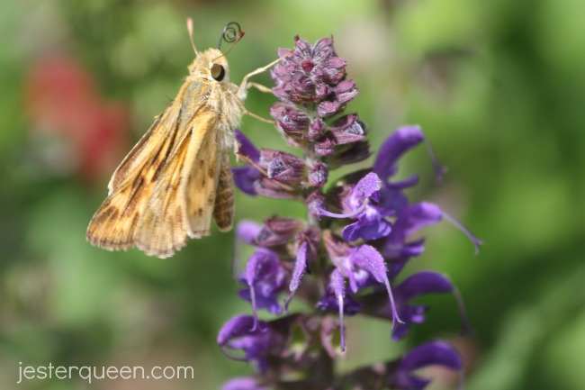 Yellow on purple on green butterfly